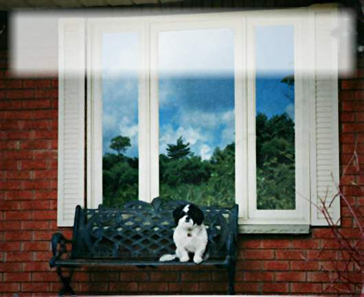 Dog sitting on bench in front of window